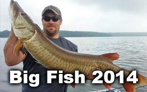 big-fish-thumbnails-2014