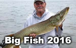 big-fish-thumbnails-2016